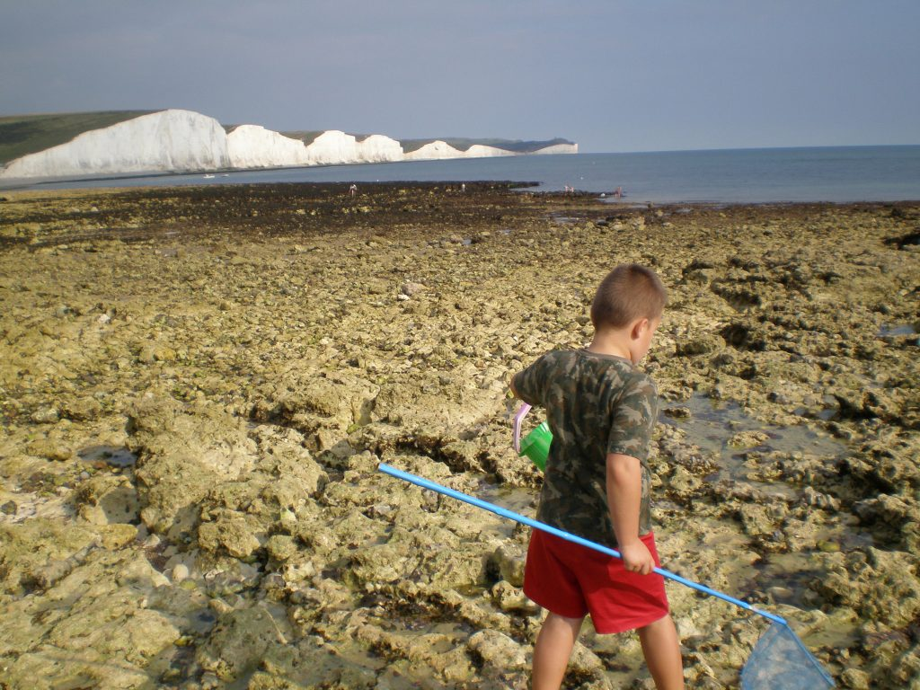Seven Sisters from Seaford rockpools