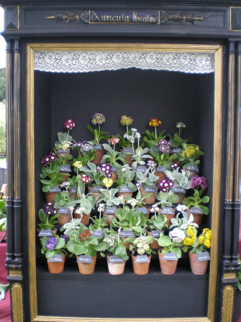 auricula theatre courson flower show