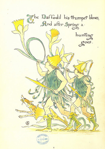 daffodil trumpet illustration
