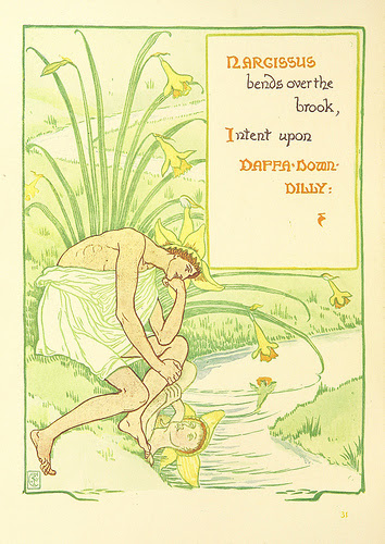 narcissus illustration