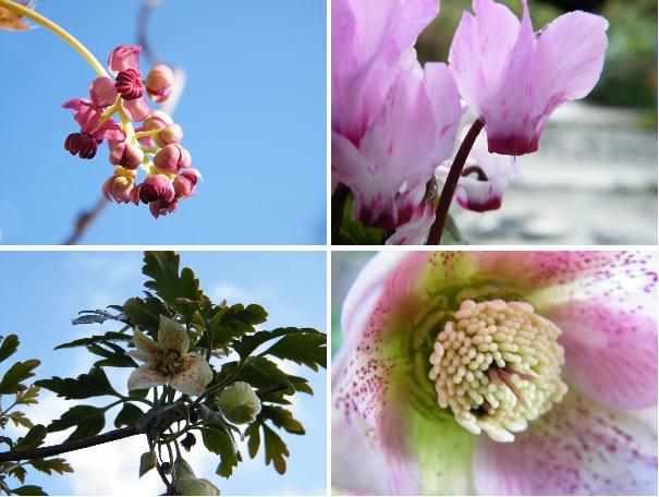 february garden montage