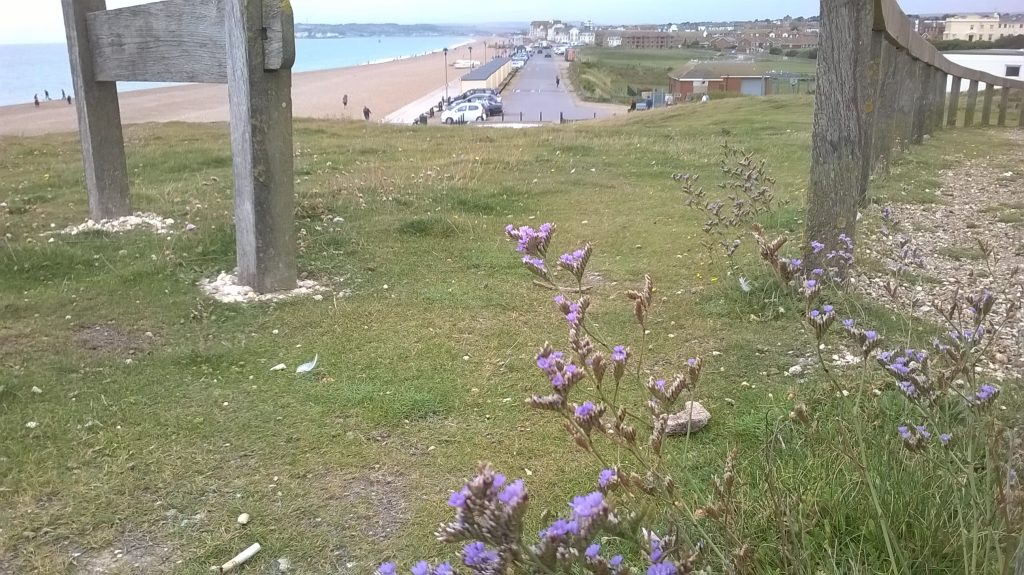 seaford head wildflowers