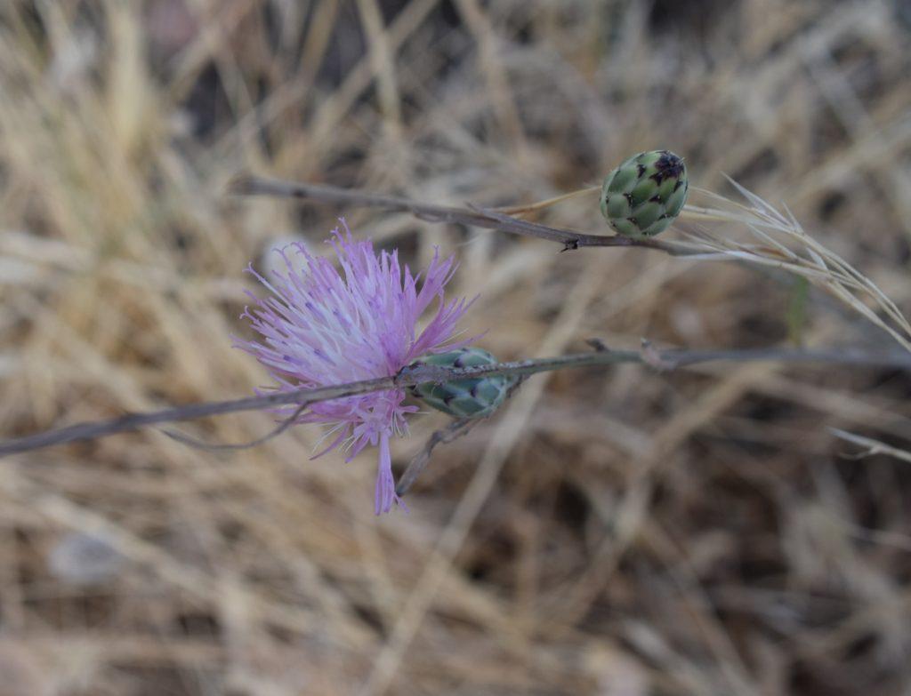 spain wildflowers