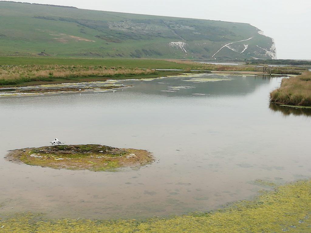 seven sisters wetlands