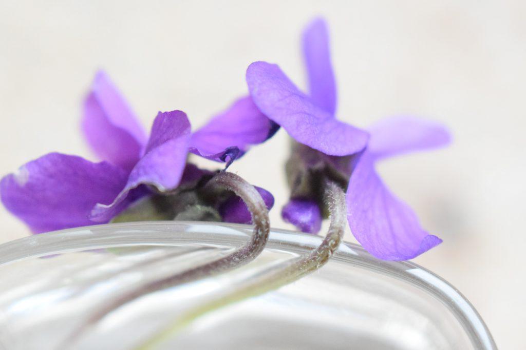 violet stems comparison