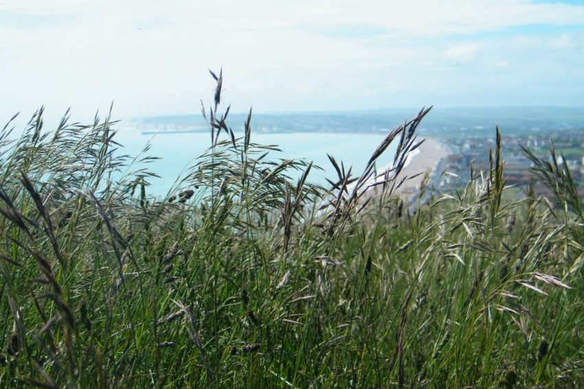 seaford head grasses