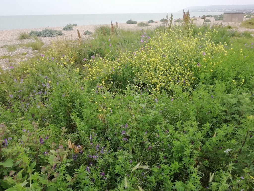 Eastbourne beach near Sovereign harbour