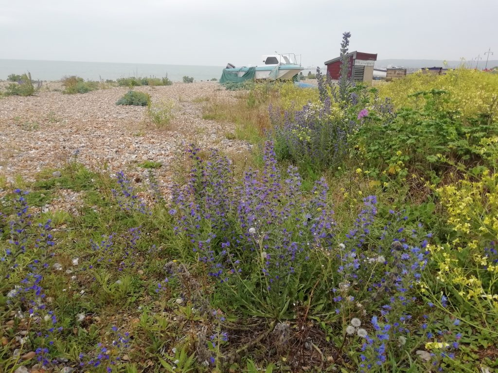 Eastbourne seafront near net huts