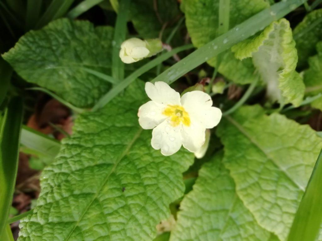 primrose blatchington hill seaford feb 2020