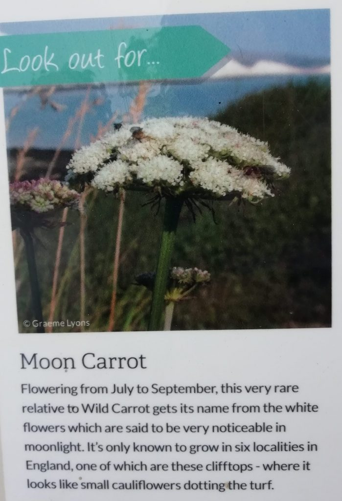 seaford head moon carrot sign