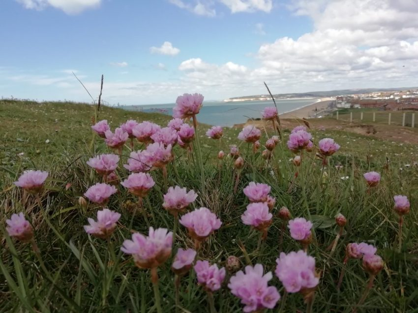 thrift seaford bay may 2020