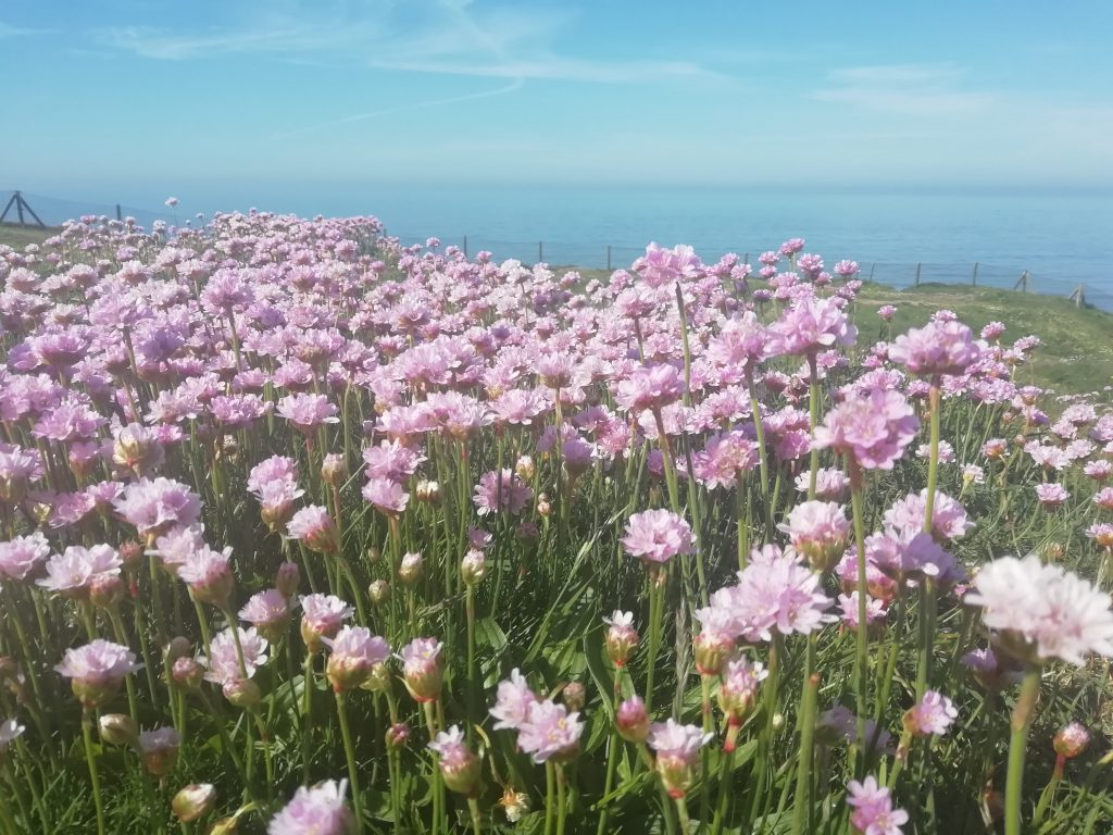 thrift seaford head may 2020