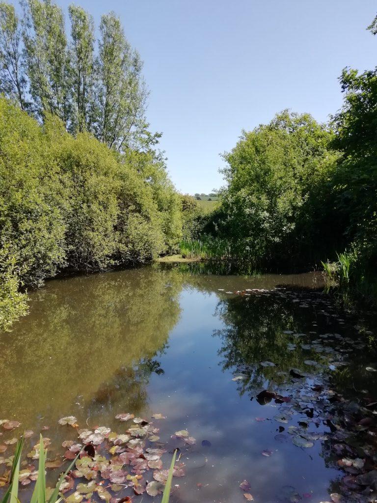 Bishopstone pond