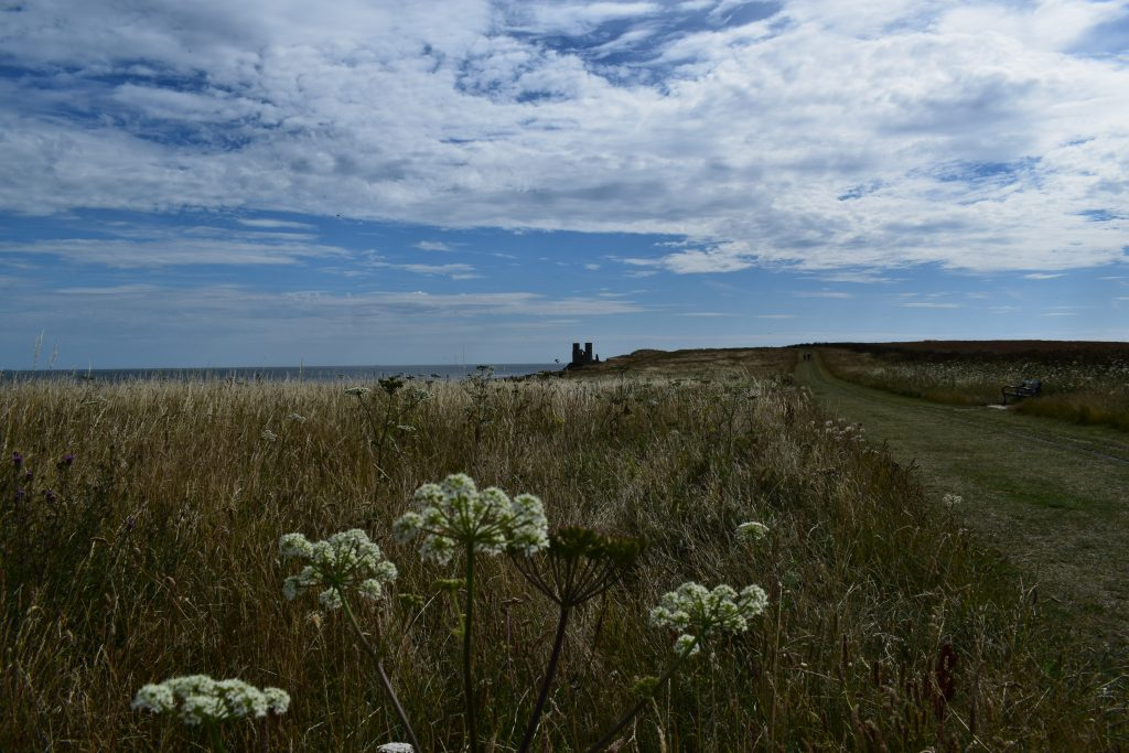 grassy wildflower meadow hogweed heracleum sphondylium reculver towers july 2020