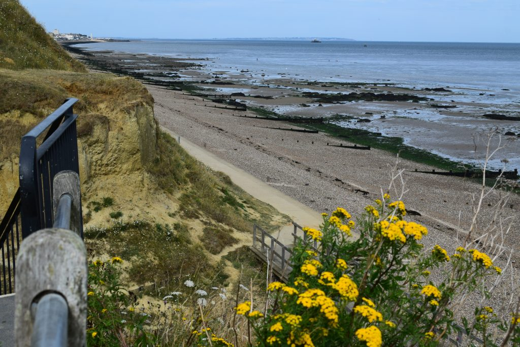 tansy tanacetum vulgare steps seaside kent july 2020