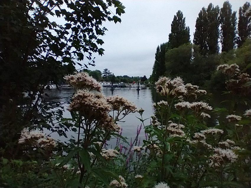 chertsey river thames