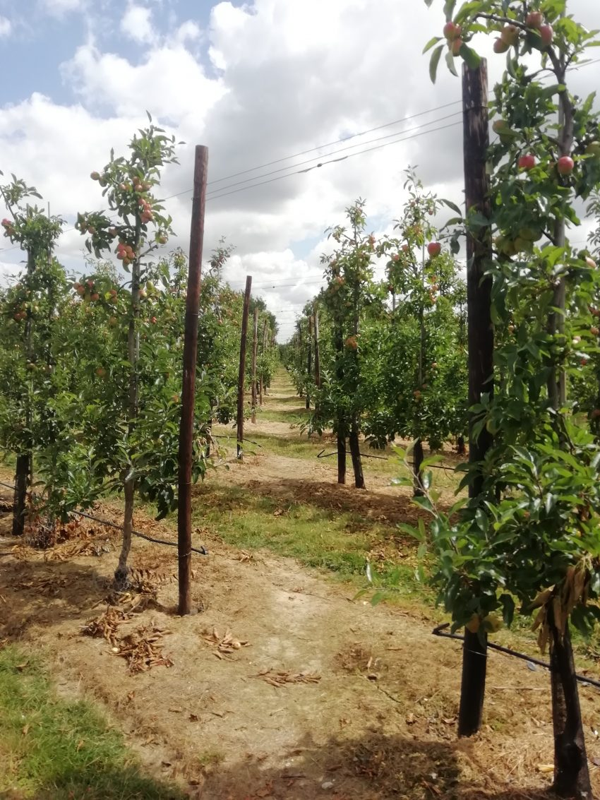 orchard marden kent july 2020